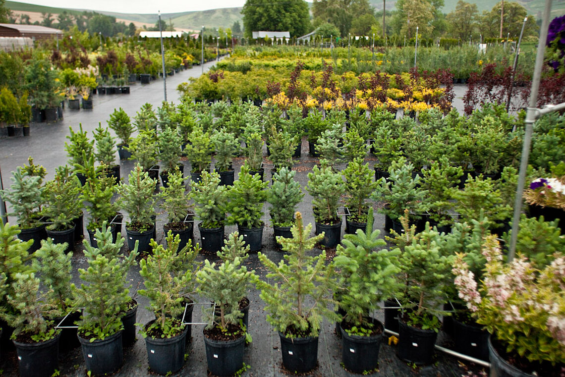 Ace Landscaping Nursery: Dayton Location.