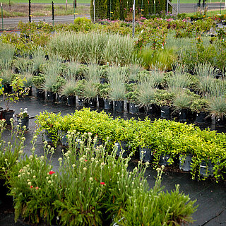 Grasses and other plants